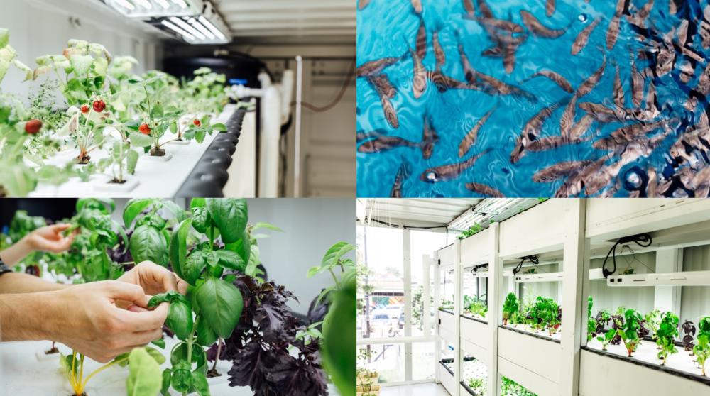 Job offer – recirculating aquaculture specialist – Feeding